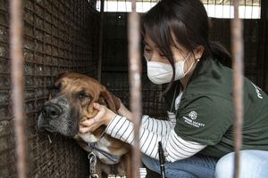 Nara Kim, campaign manager of HSI Korea, gently comforts a dog at a former dog meat farm in Yongin, South Korea,