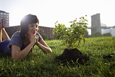 A woman looks at a small sapling in the ground.