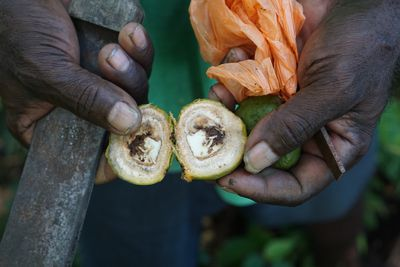 A pair of hands holding a fruit that has been sliced in half. Soloman Islands.