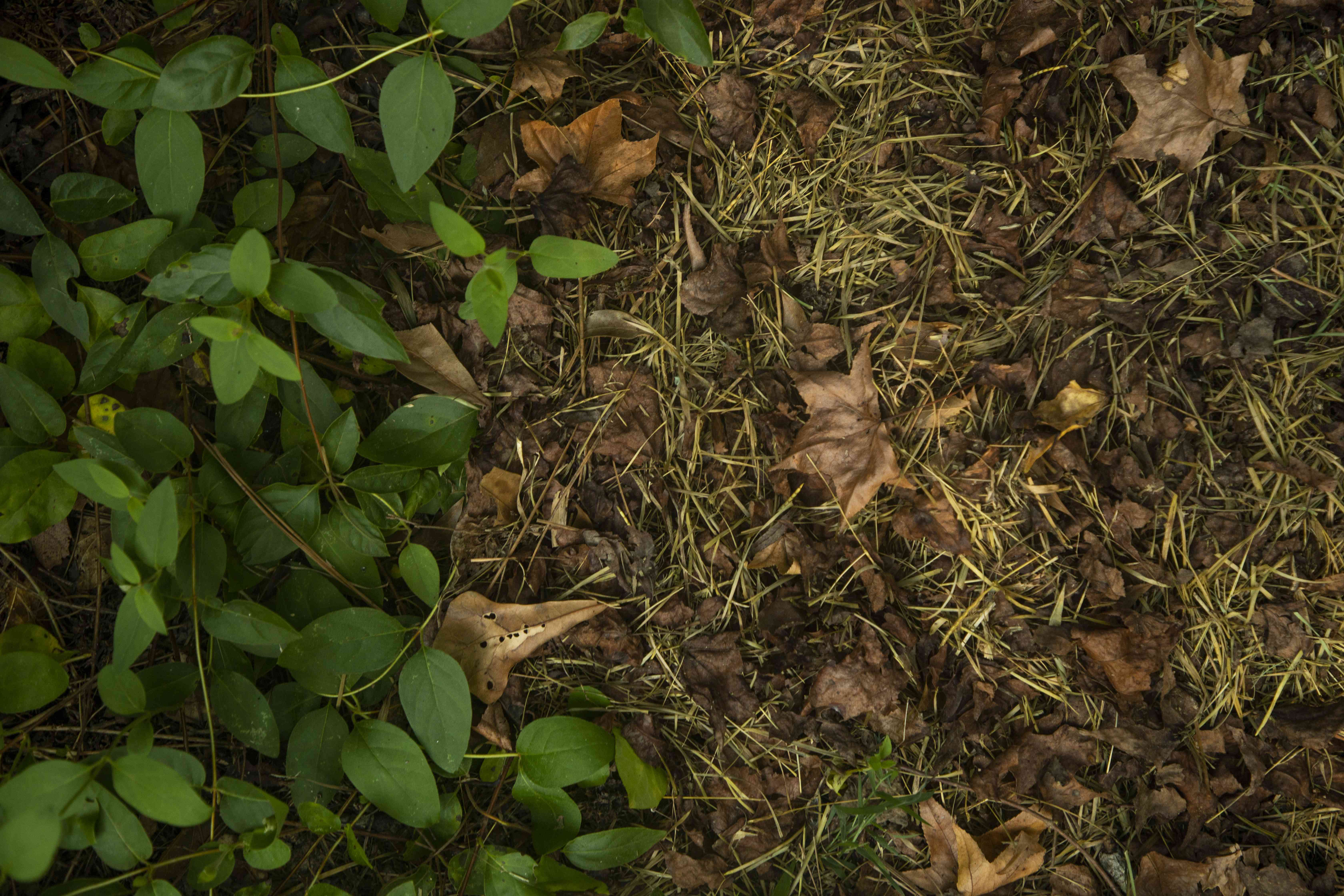 green vines and dead brown leaves on ground