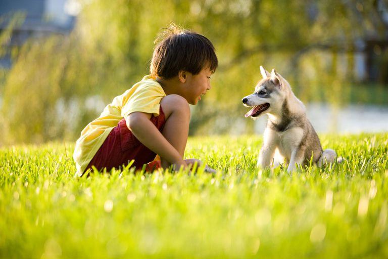 little boy talking to puppy