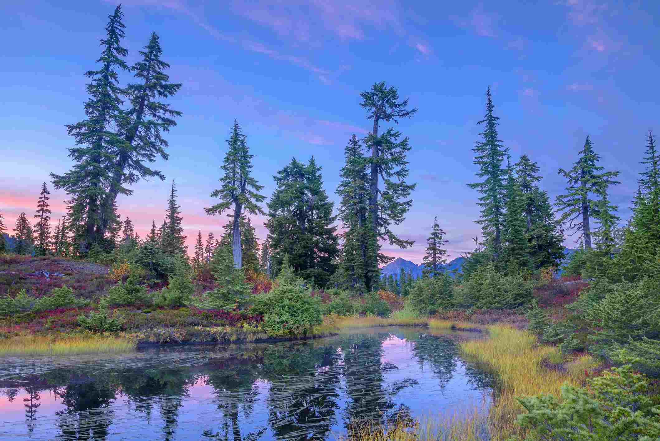 Mount Baker-Snoqualmie National Forest in Washington