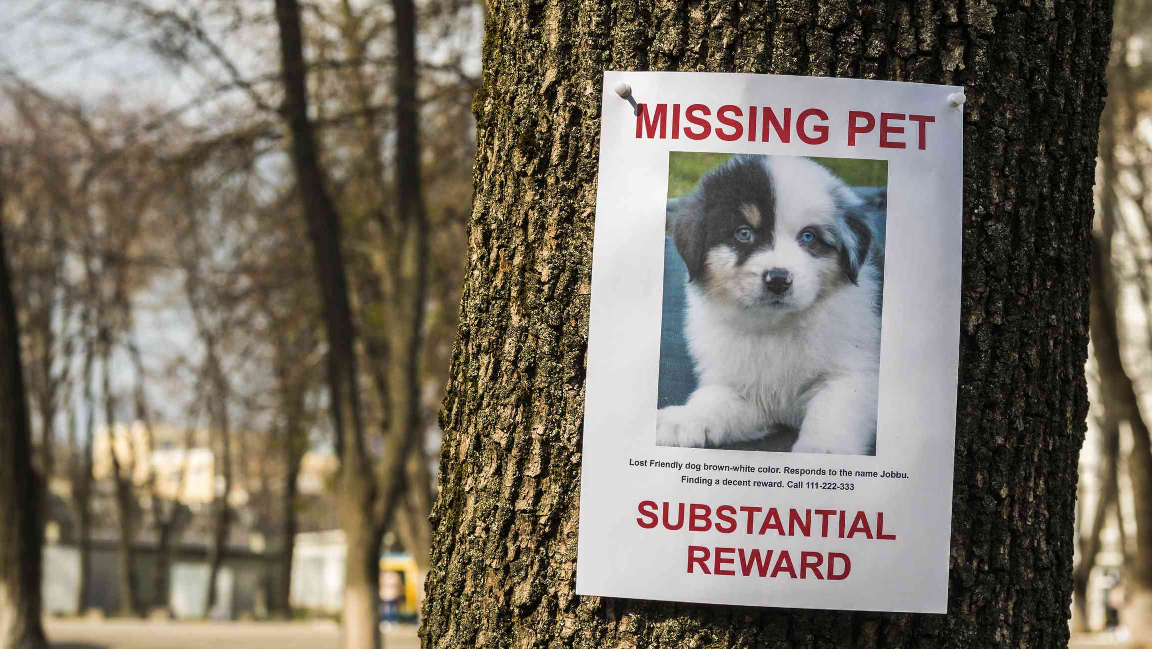 A lost dog poster advertising a reward.