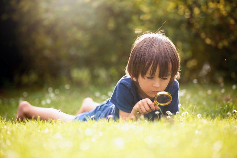 Alabanza a la curiosidad