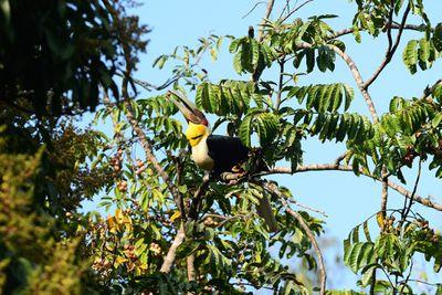 Bird foraging wild fruit in natural
