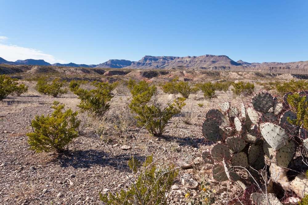 The Chihuahuan Desert landscape