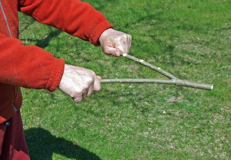Water Witchery: ¿Es Hocus-Pocus o ciencia?