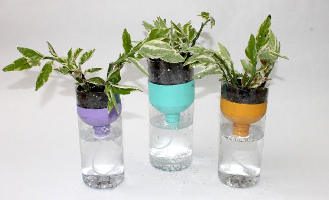 Plastic bottles converted into a self-watering pot
