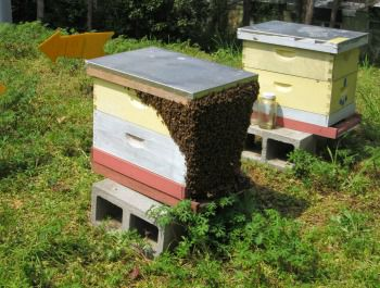 two colorful beehives with bees