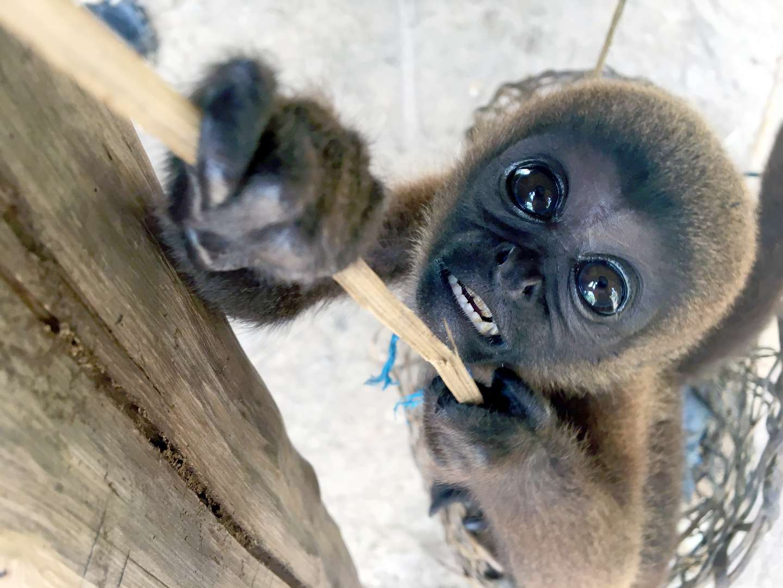 monkey raised by tribe