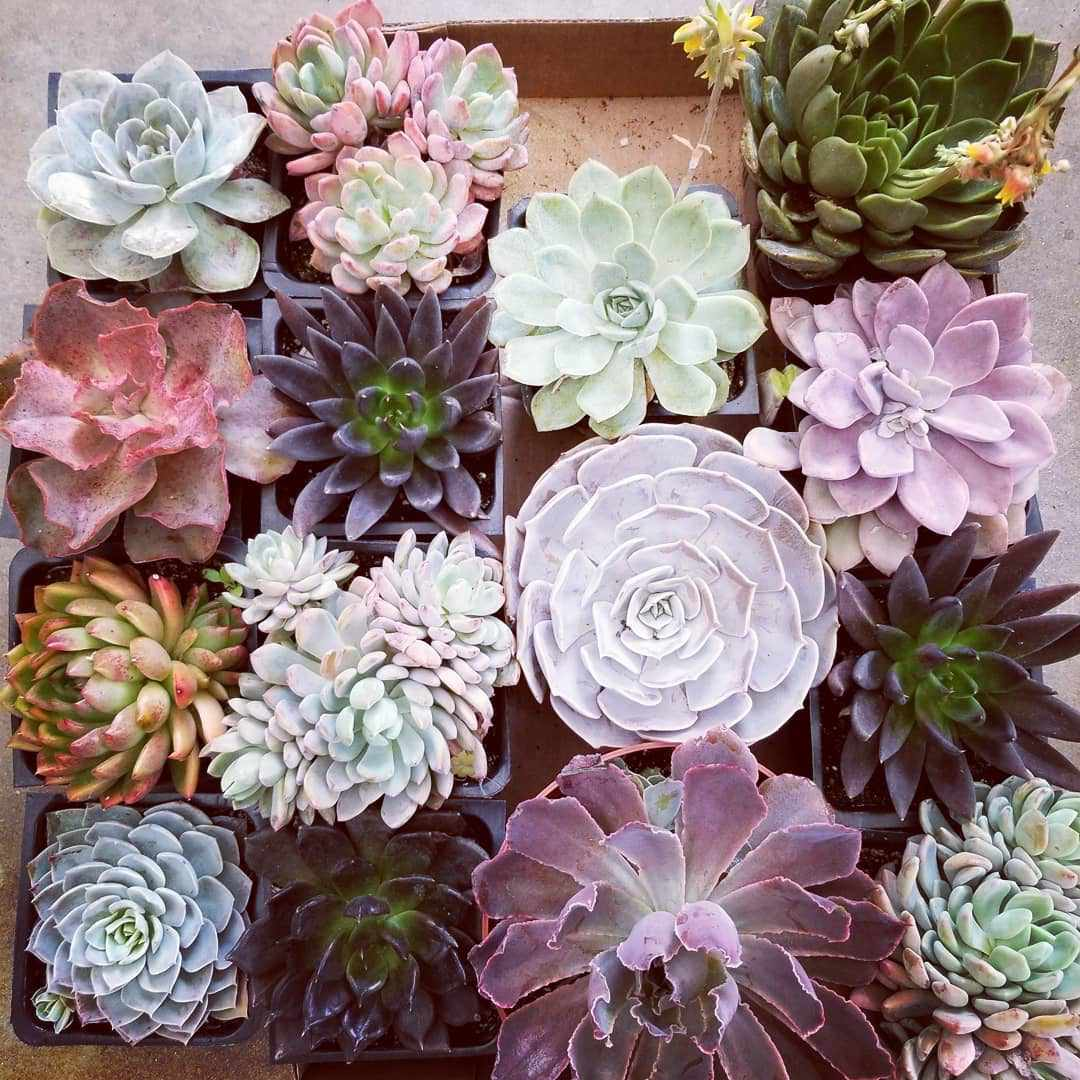 Collection of succulents ready to be planted