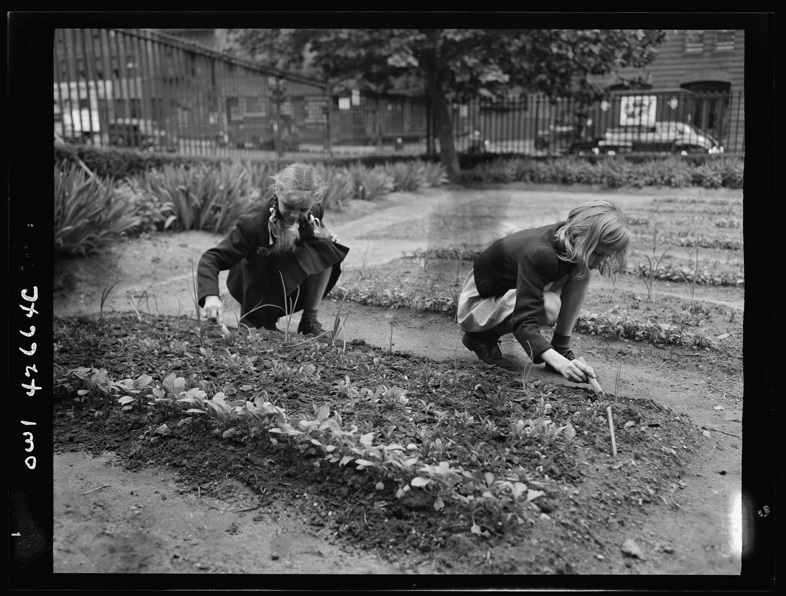 Two girls working in a garden in New York City