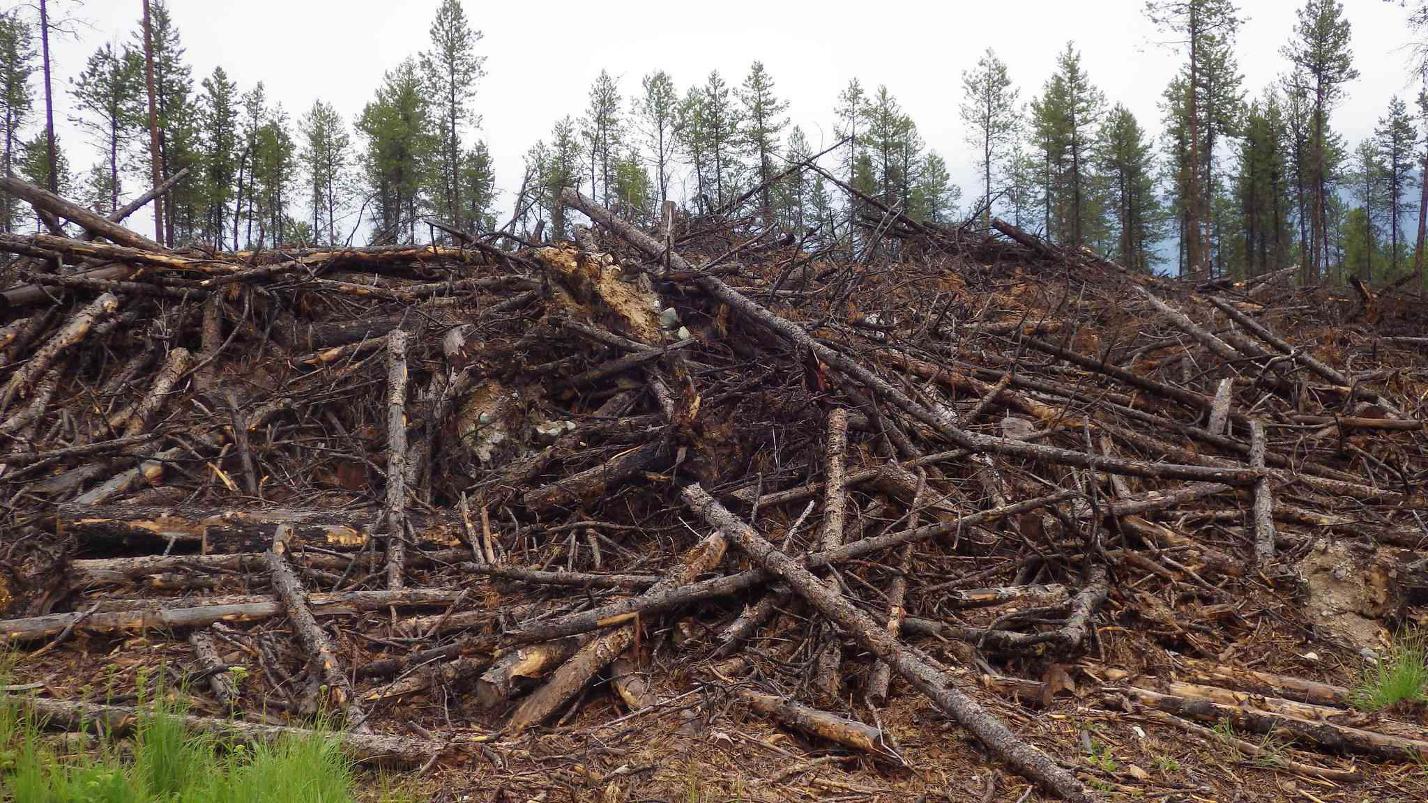 Wood waste can be converted into biochar.