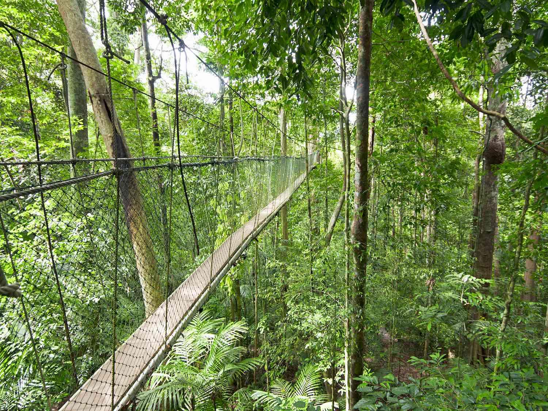 A foot bridge suspended above a rainforest