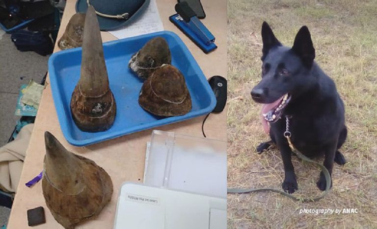 Detection dog and rhino horns seized at an airport in Mozambique.