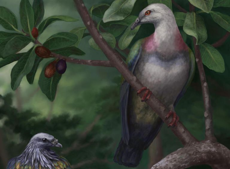 Beautiful illustration of a large, colorful pigeon