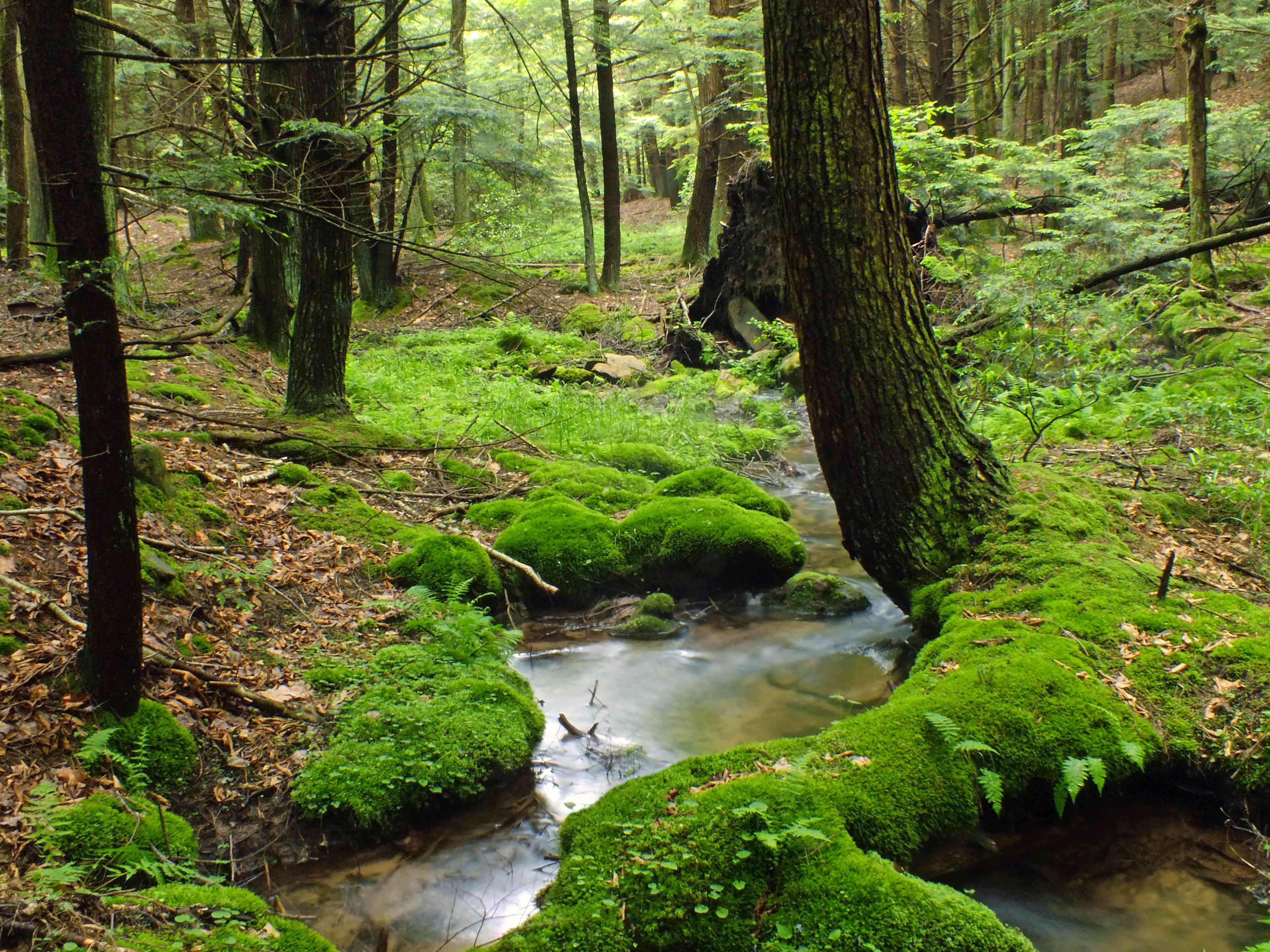 headwaters of Panther Run creek, Pennsylvania