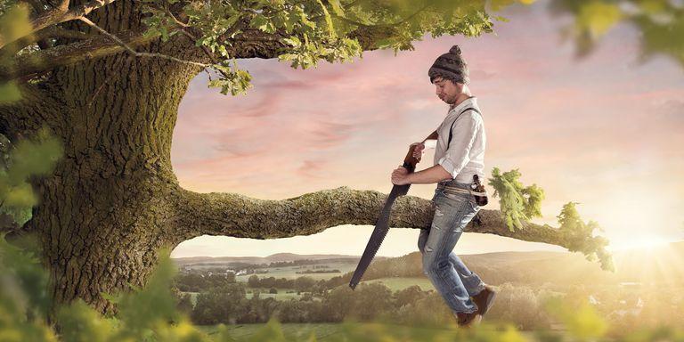 stupid person cutting tree