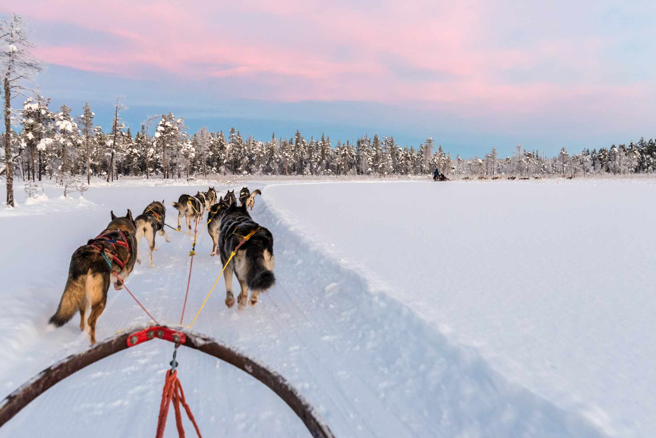 Dog sled team viewed from the sled in the Swedish Laplands