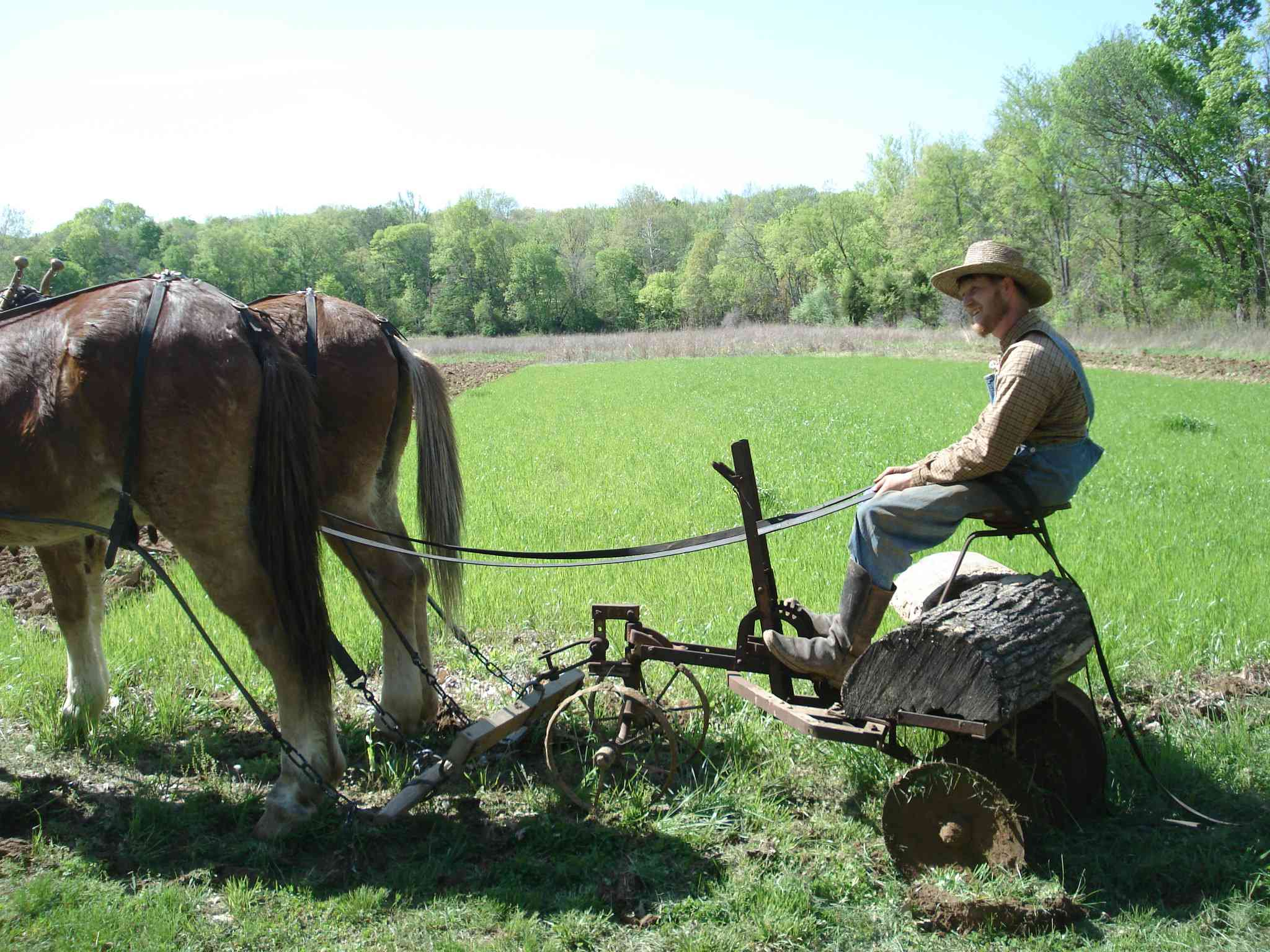 A man sits on a traditional mule-drawn plow in a farm field