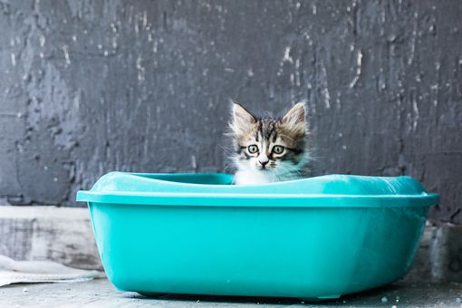 striped kitten peeks out from turquoise litter box in gray room