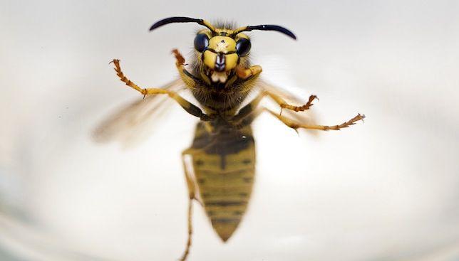Cómo convivir con abejas o avispas de mal genio