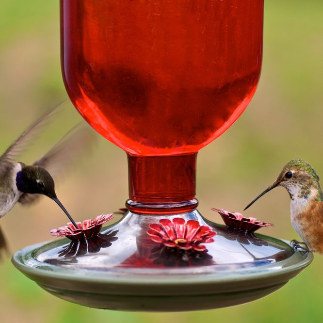 Are Hummingbird Feeders Safe For The Birds