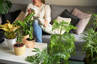 woman sits on couch surrounded by houseplants including norfolk pine, croton, zz, and jade