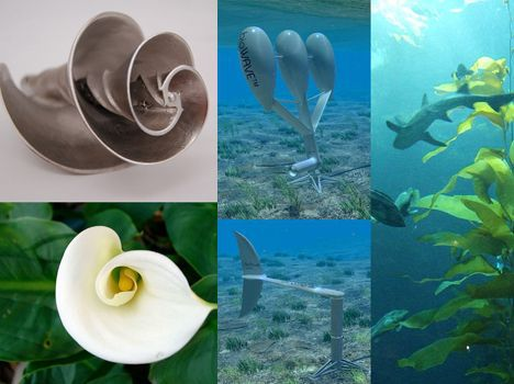 Biomimicry examples image