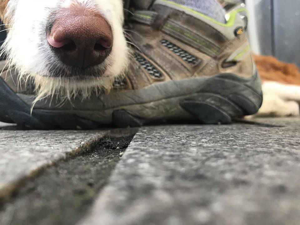 A close-up of a dog sitting on the street.