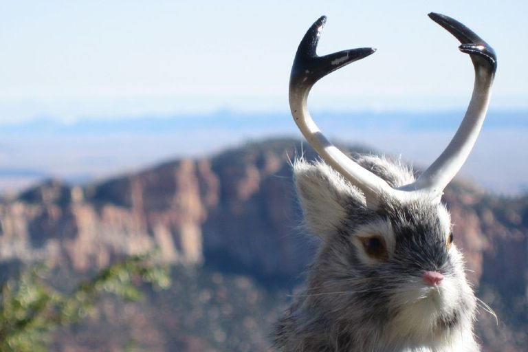 jackalope rabbit with antlers taxidermy in front of mountain backdrop