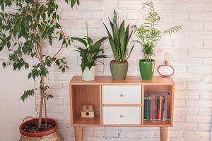 four popular varieties of house plants emit their own VOCs hero image
