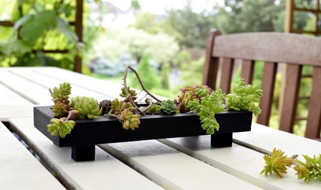 A miniature tray garden with succulents