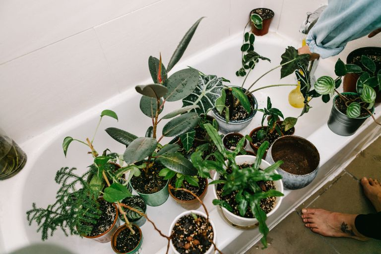 group of plants in white shower tub waiting for water
