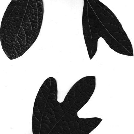 Silhouettes Sassafras Leaves
