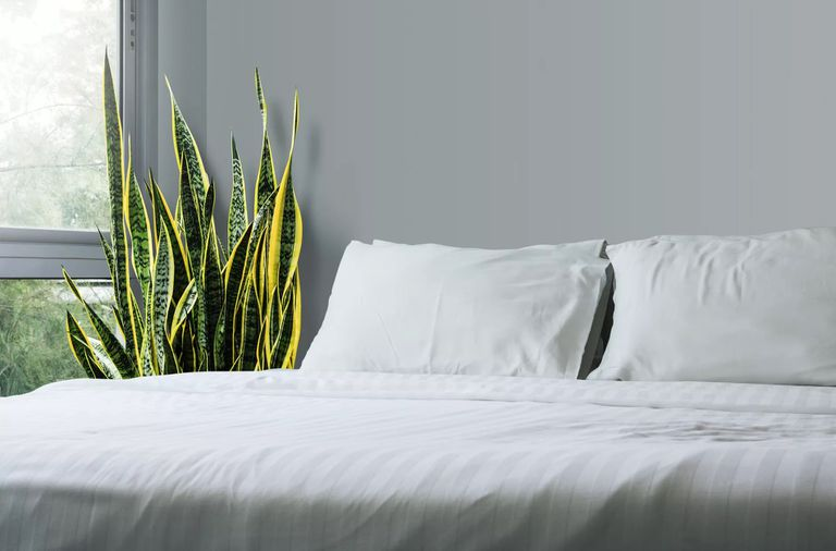 A snake plant sits next to a bed with white sheets