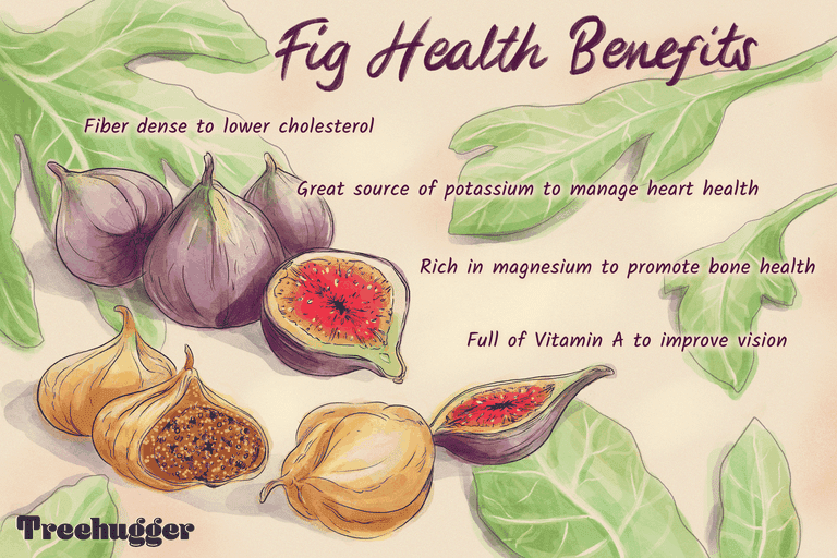 illo showing health benefits of figs