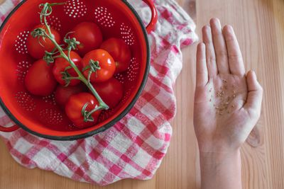 bowl of tomatoes in red colander with outstretched hand holding dried tomato seeds