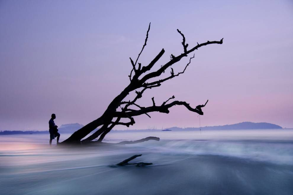 A man walks up a tilted tree shrouded in mist