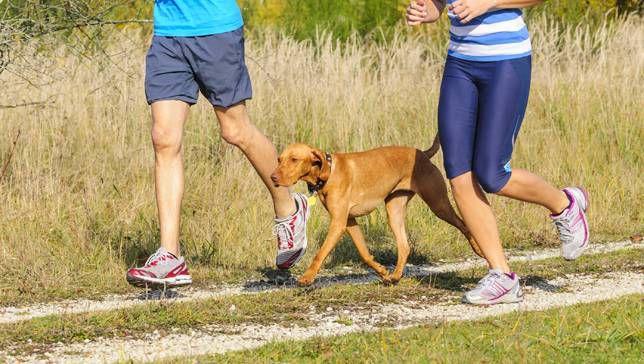 Cómo empezar a correr con tu perro