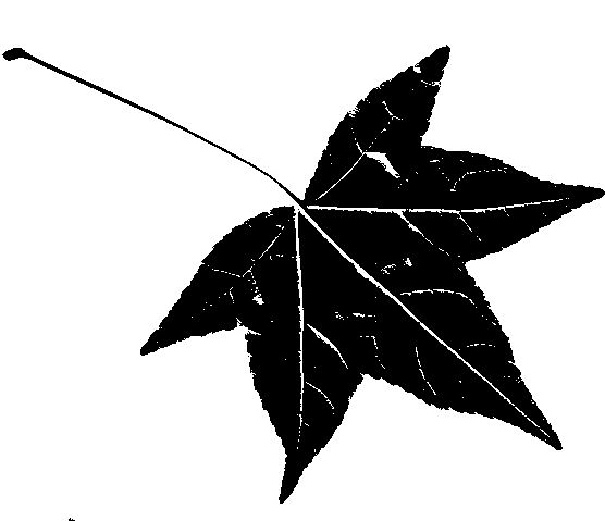Silhouettes Sweetgum Leaf