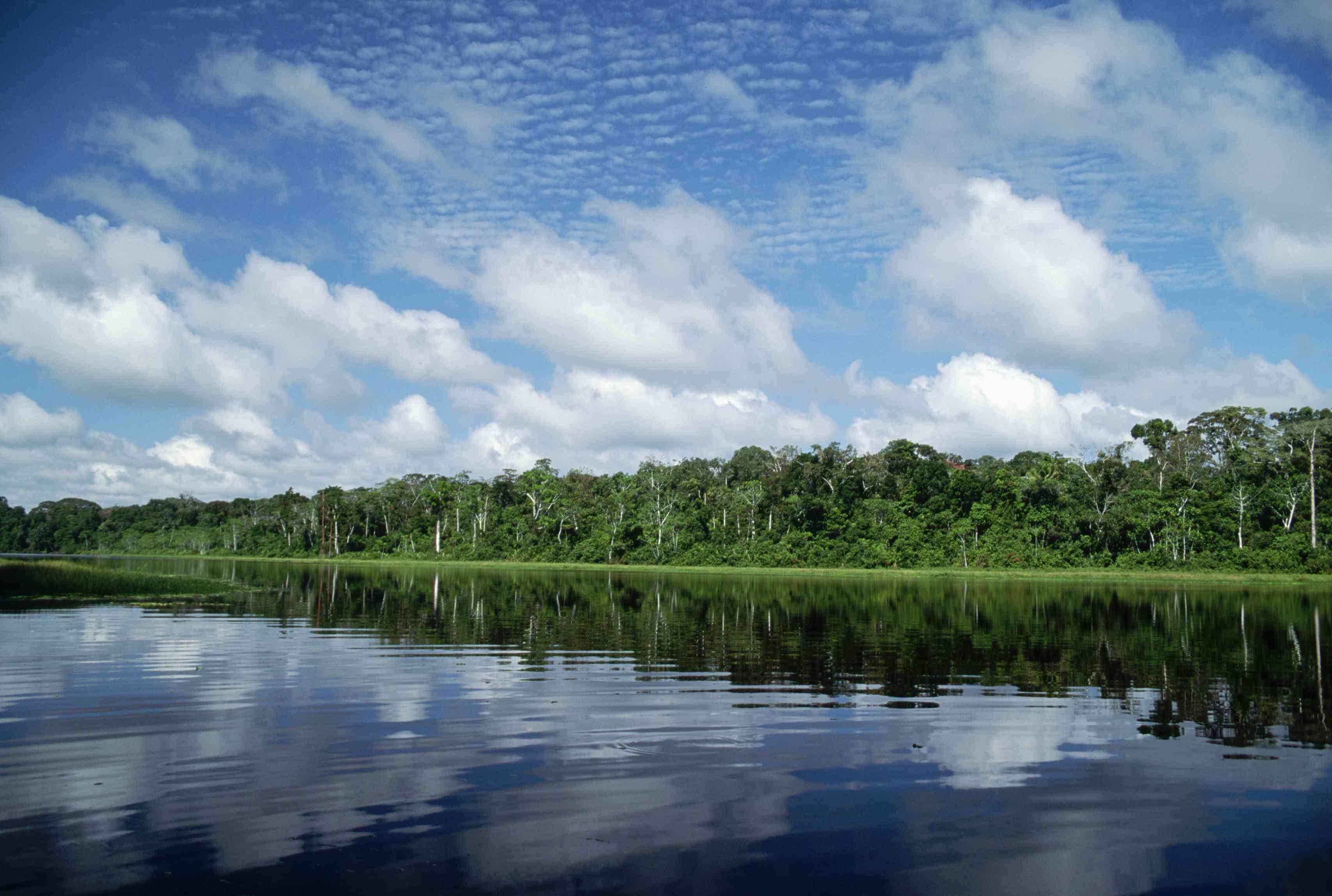 Oxbow Lake in Manu National Park Peru