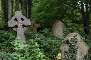 overgrown graveyard