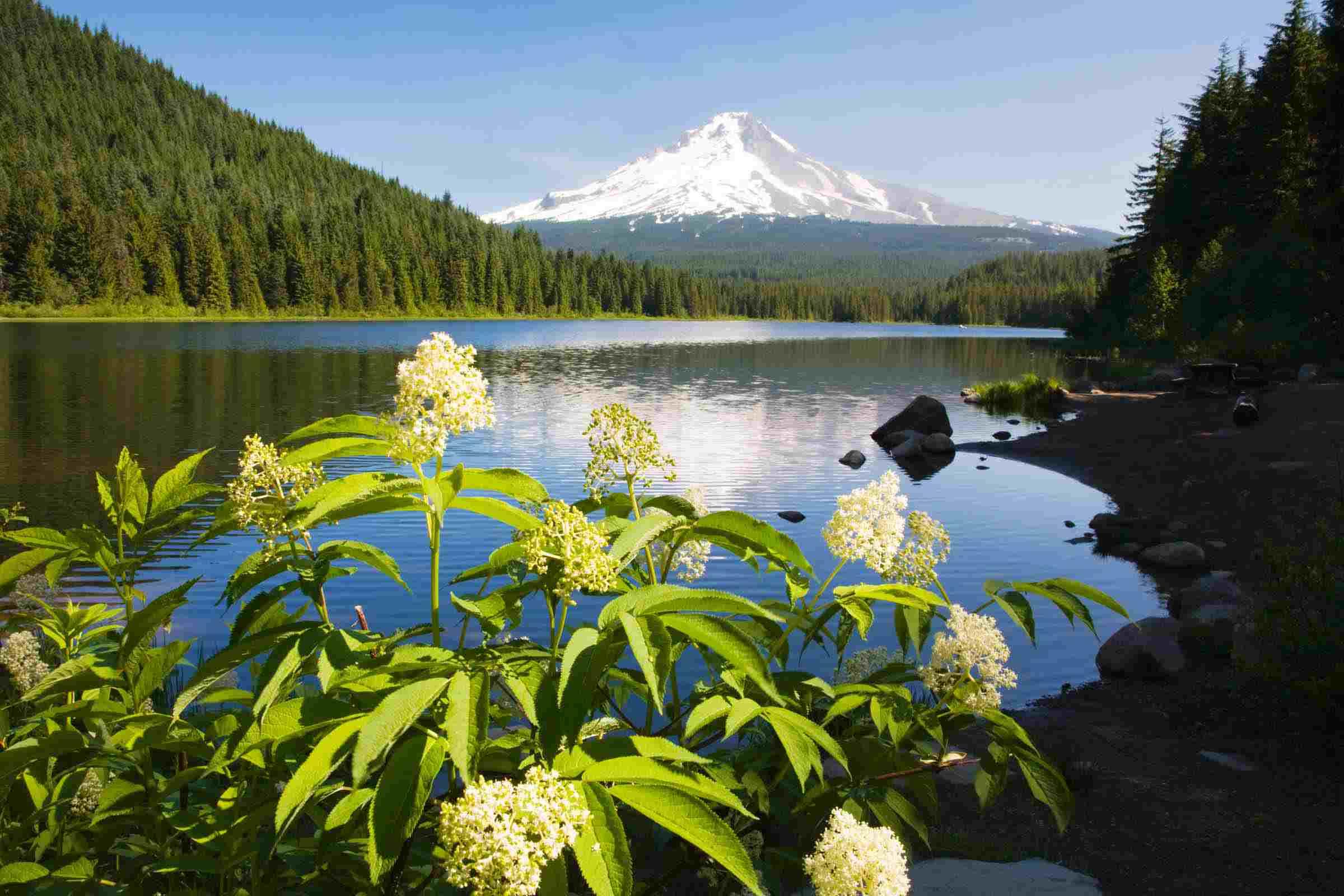 Mount Hood National Forest in Oregon