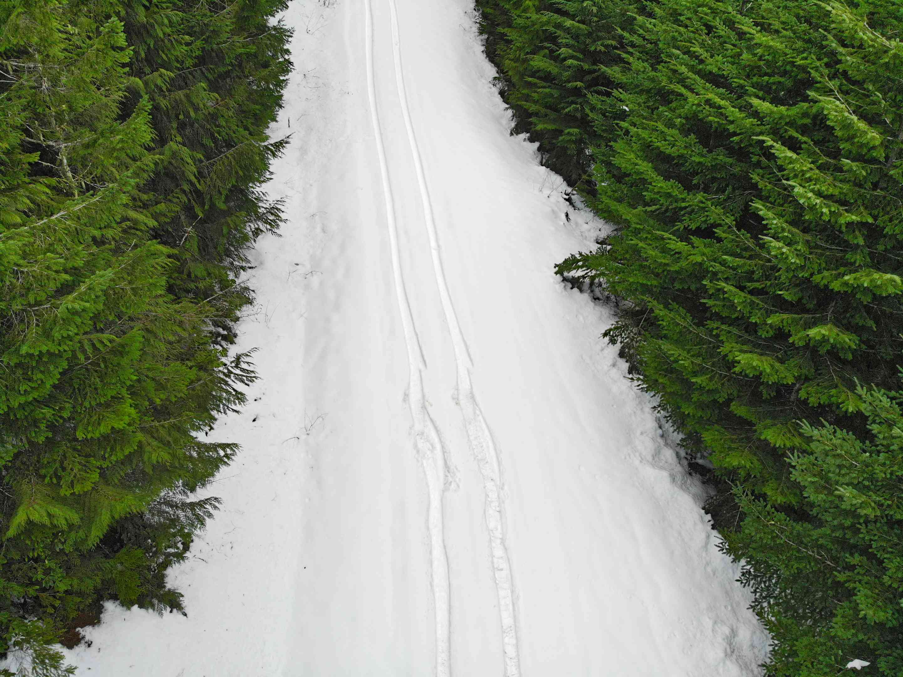 drone shot of tire tracks in snow surrounded by fir trees