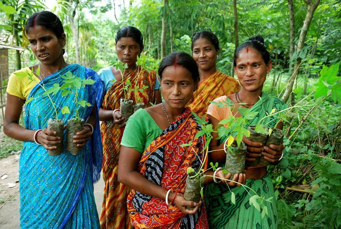 indian women with saplings photo