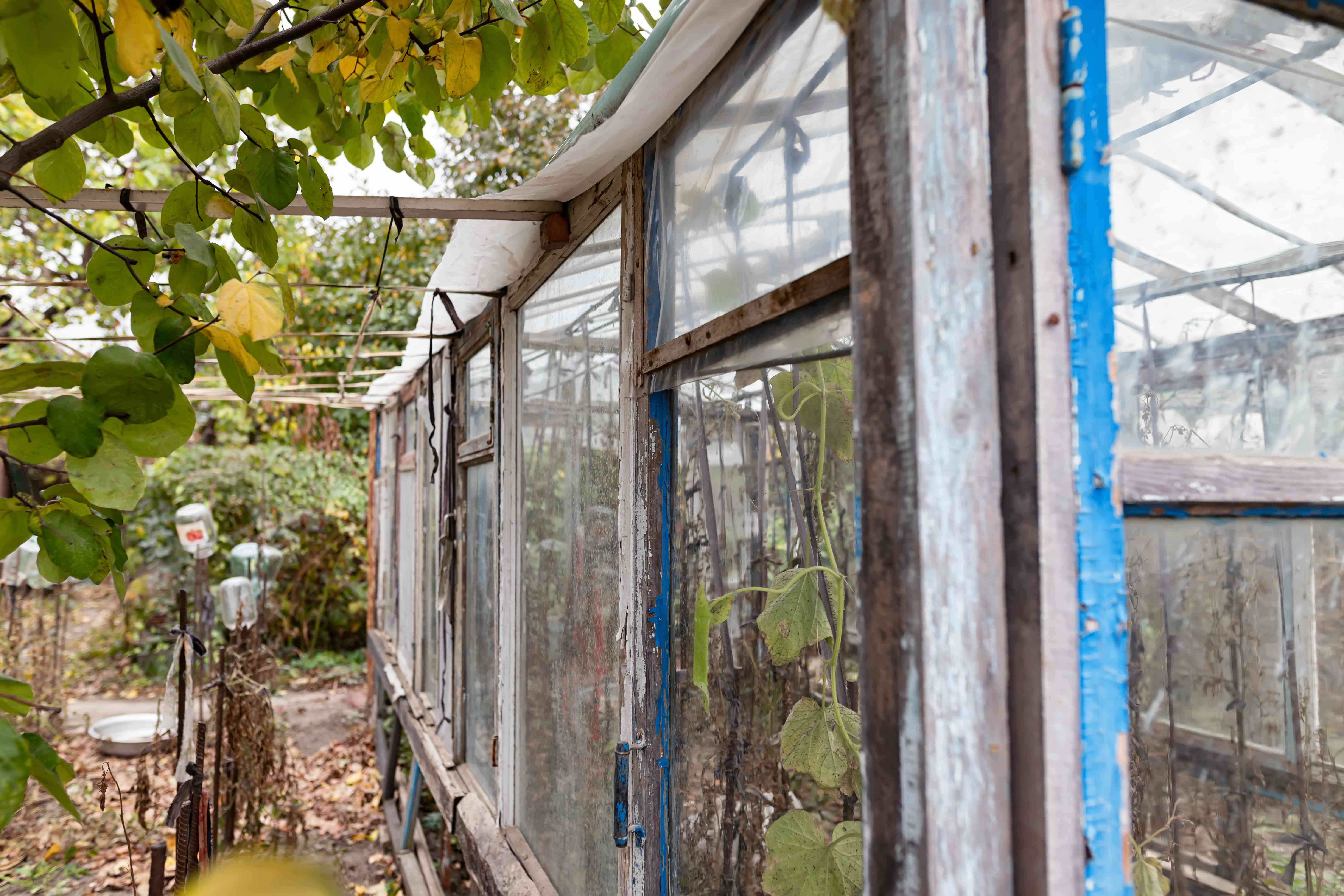 View of the greenhouse made of old window frames and improvised materials