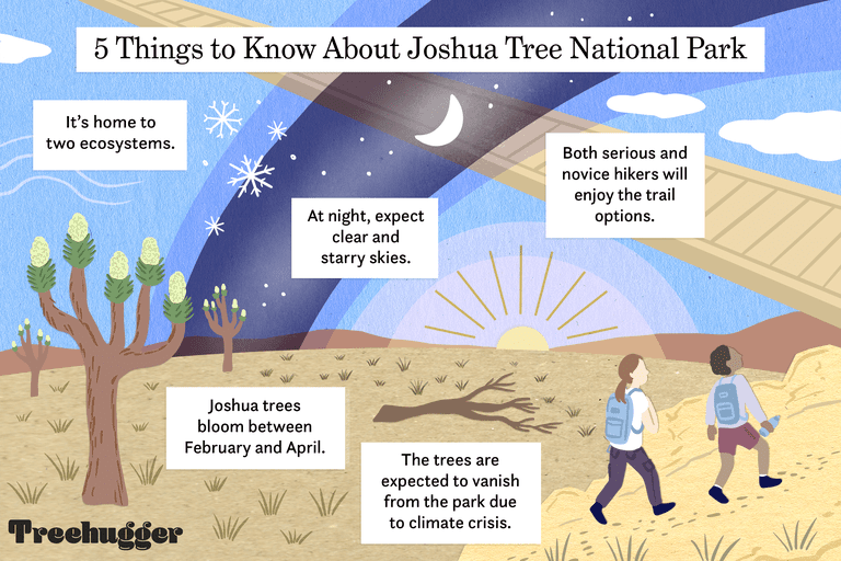 color illo showing interesting facts about joshua tree national park