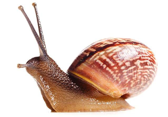 A snail on high alert