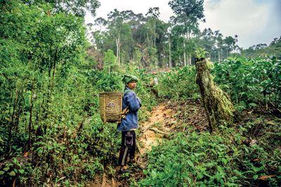 farmer in north Sumatra
